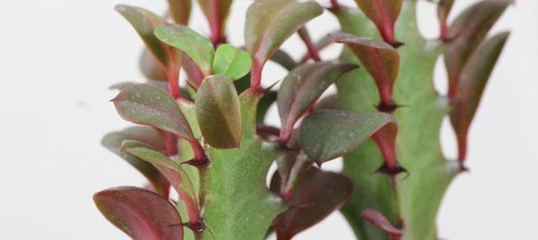 Hängepflanzen Zimmer halbschattig zimmerpflanzen pflege