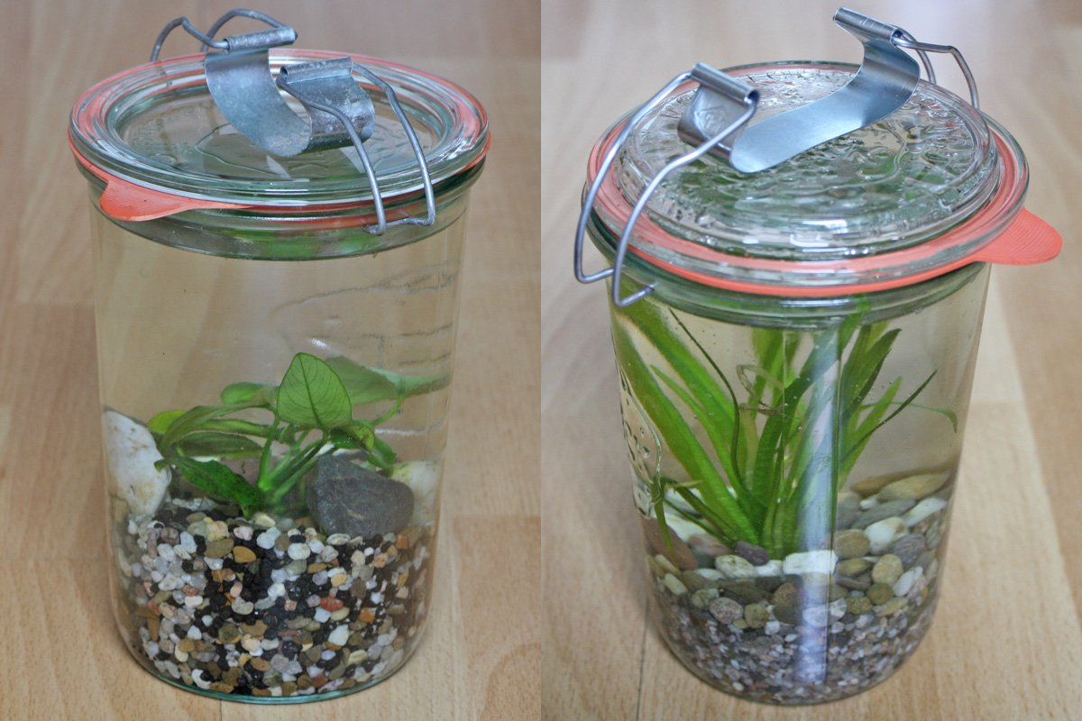 Wasserpflanzen im Einmachglas