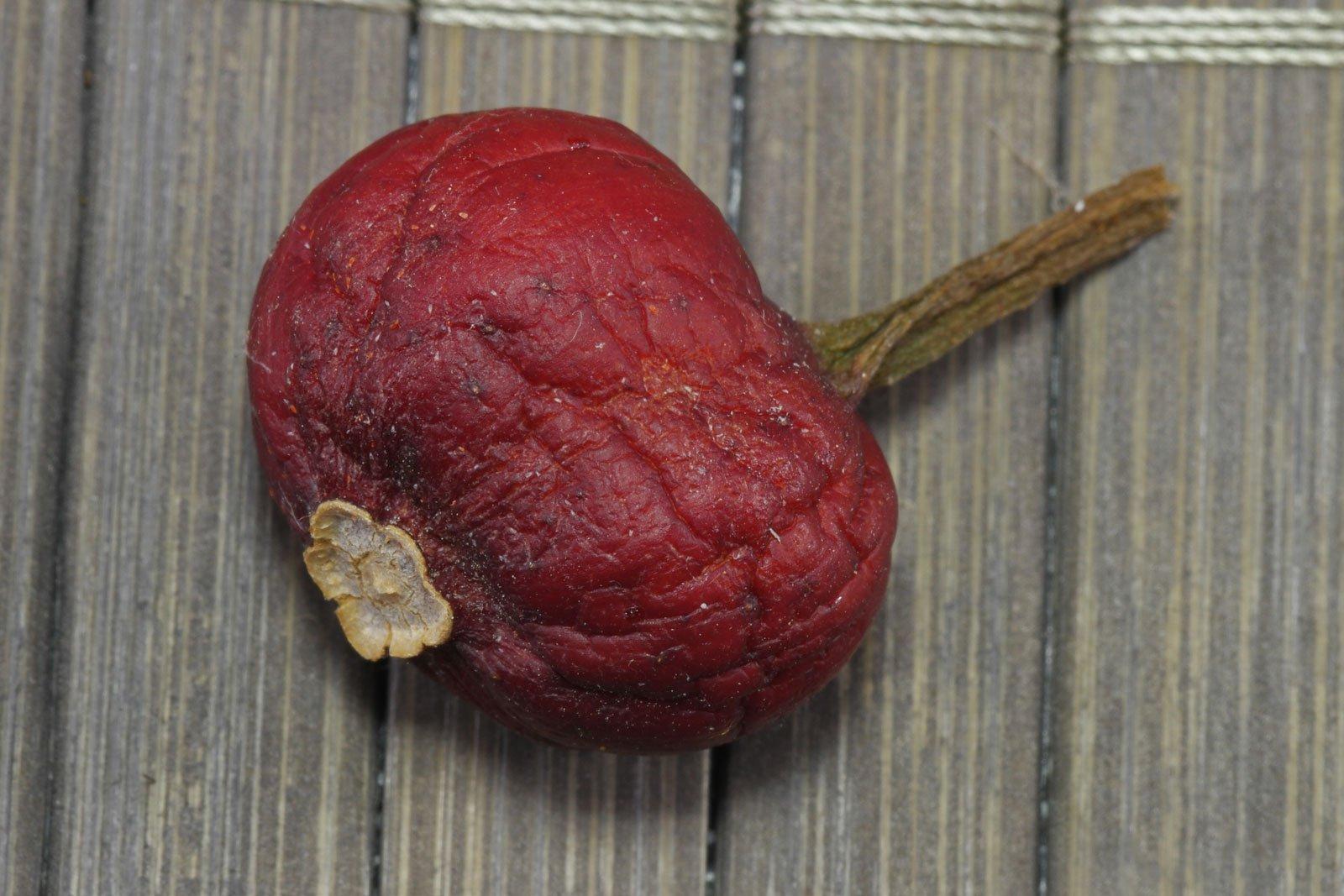 Klivie Frucht