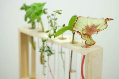 Pflanzen ohne Erde