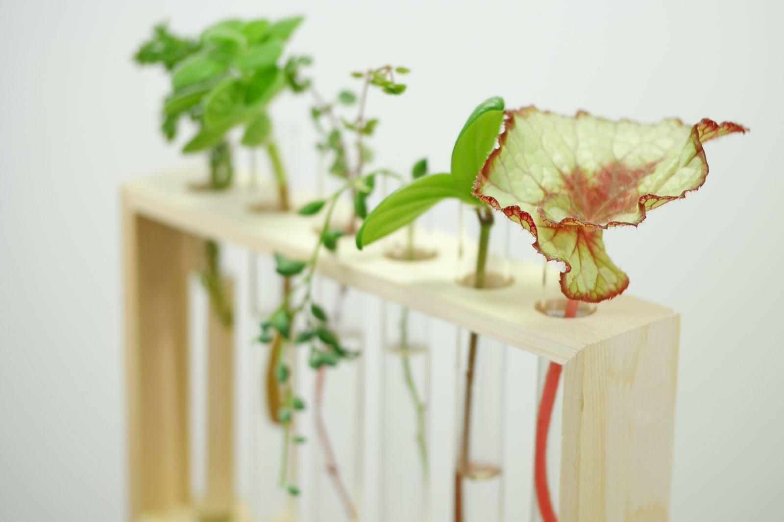 Wasserpflanzen im Glas