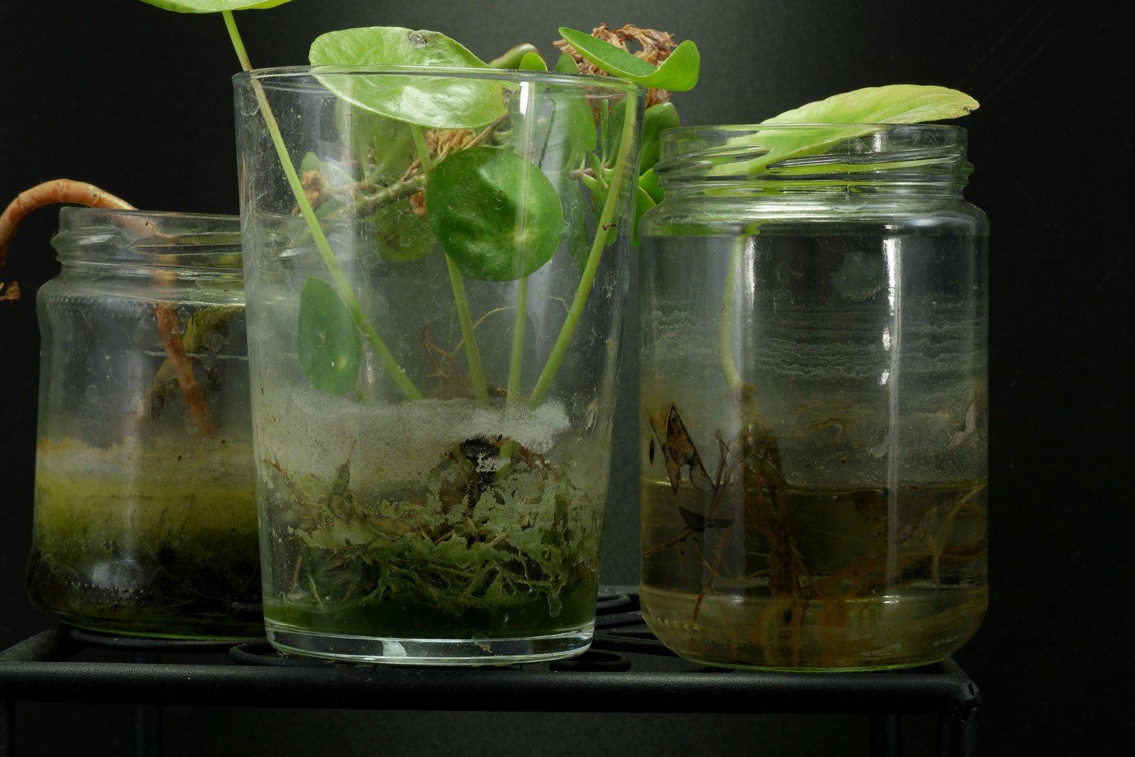 Zimmerpflanzen ohne Erde